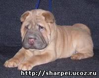 http://sharpei.ucoz.ru/_bl/0/04128136.jpg