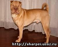 http://sharpei.ucoz.ru/_nw/0/81851675.jpg