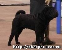 http://sharpei.ucoz.ru/_nw/0/94612167.jpg