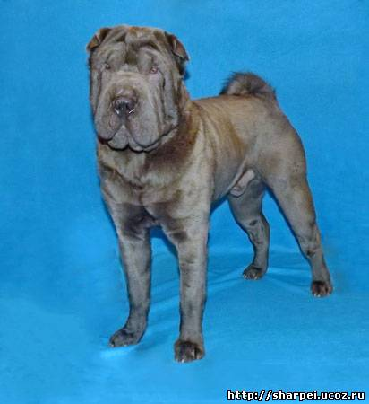 http://sharpei.ucoz.ru/_ph/189/2/796100542.jpg