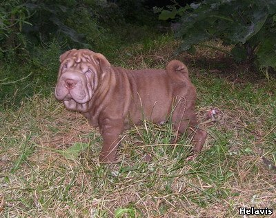 http://sharpei.ucoz.ru/_ph/50/2/327127655.jpg